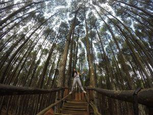 Mari piknik di hutan pinus
